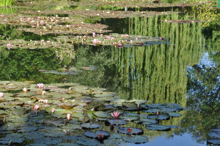 Nympheas, Giverny