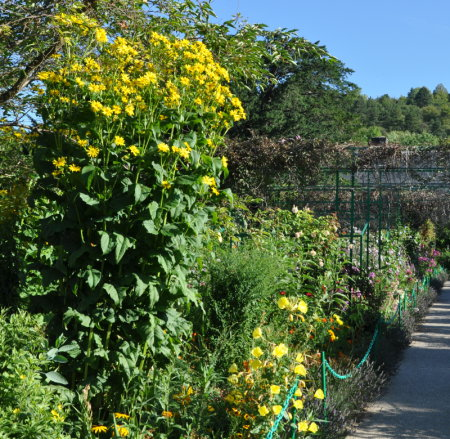 Vivaces Archives - Giverny News