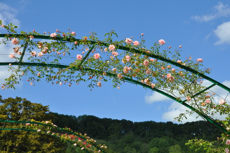 Arceau aux roses, Giverny