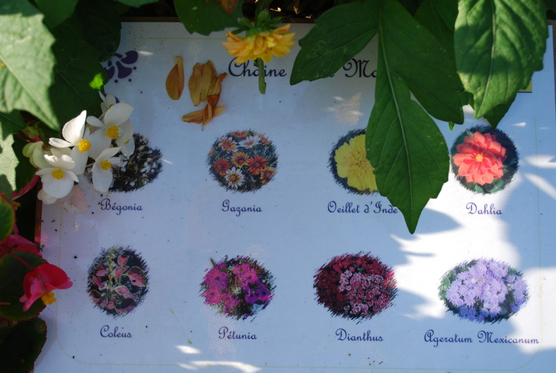Fleurs Archives Giverny News