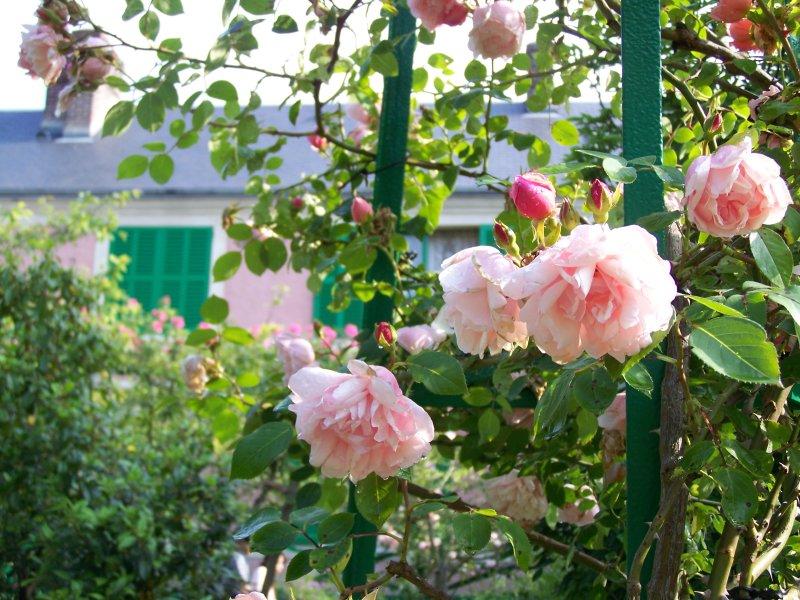 Les jardins de monet archives page 2 sur 3 giverny news - Support pour rosier grimpant ...