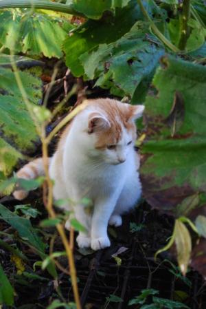 Chat dans le jardin de Monet