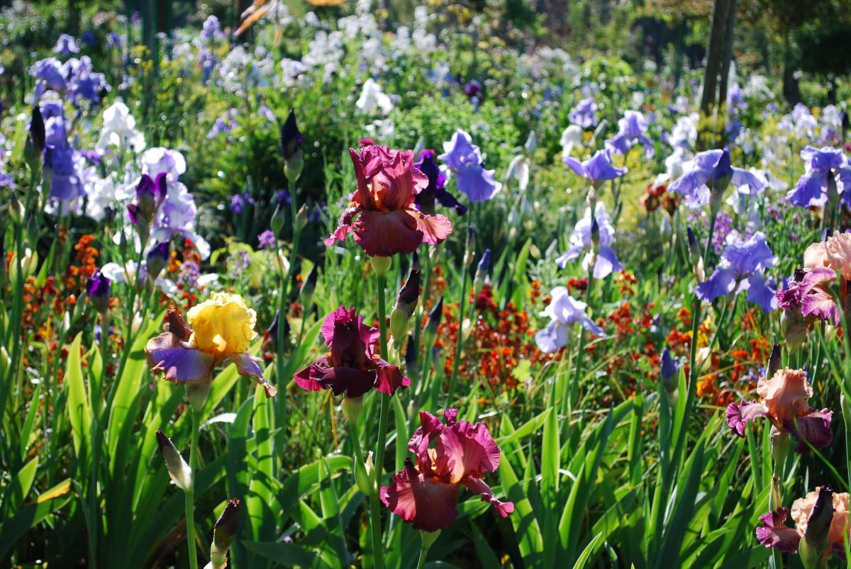 Enfants archives giverny news for Le jardin des fleurs strasbourg