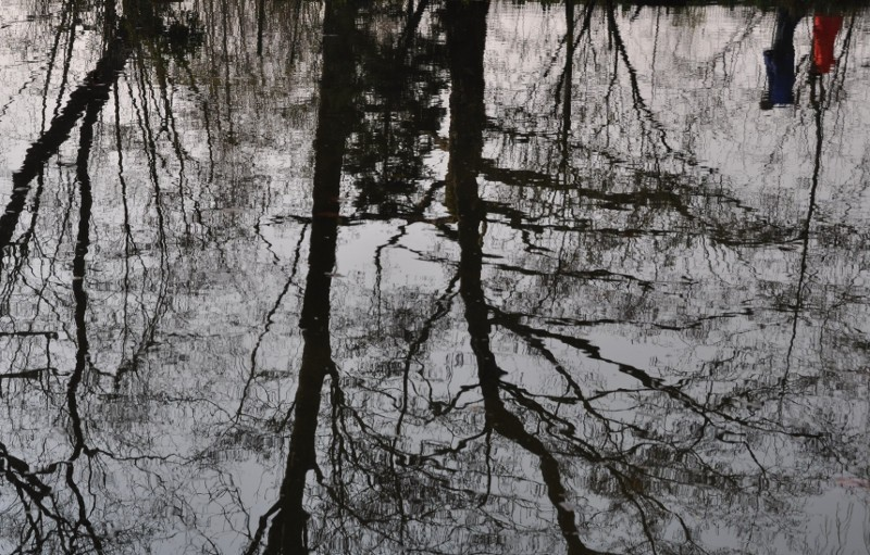 reflets d'arbres dénudés dans le bassin de Monet, reflet de visiteurs