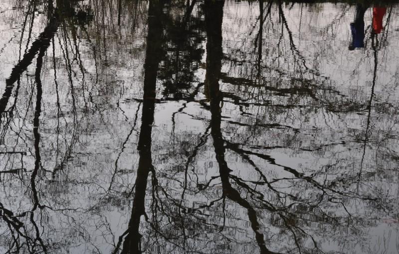 reflets d'arbres dénudés dans le bassin de Monet, reflet de visiteurs