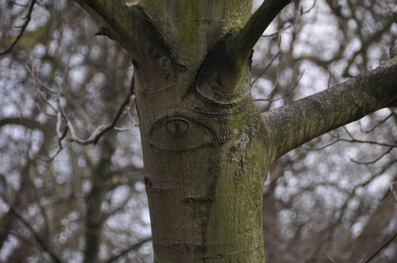 arbre-picasso