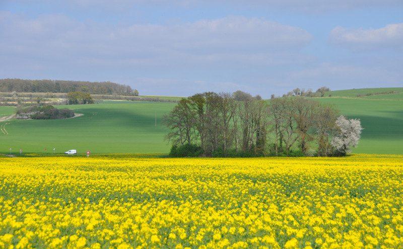 Champ de colza et paysage printanier en vallée d'Eure, Normandie, France