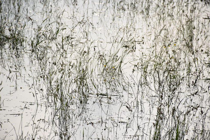 crue-herbes