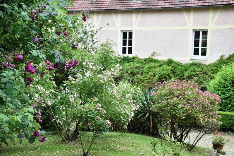 roseraie de l'hôtel Baudy à Giverny