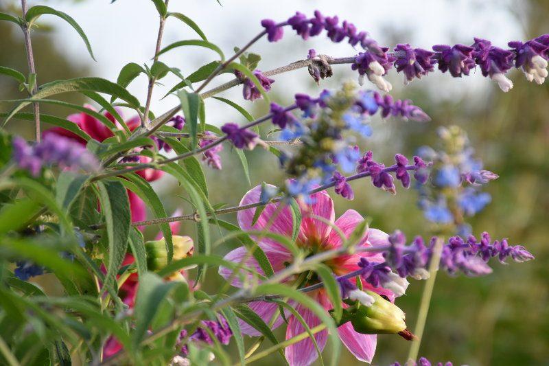fleurs d'automne à Giverny