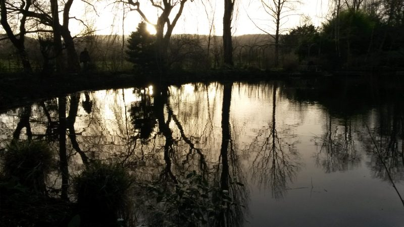 Coucher de soleil sur le bassin de Monet à Giverny