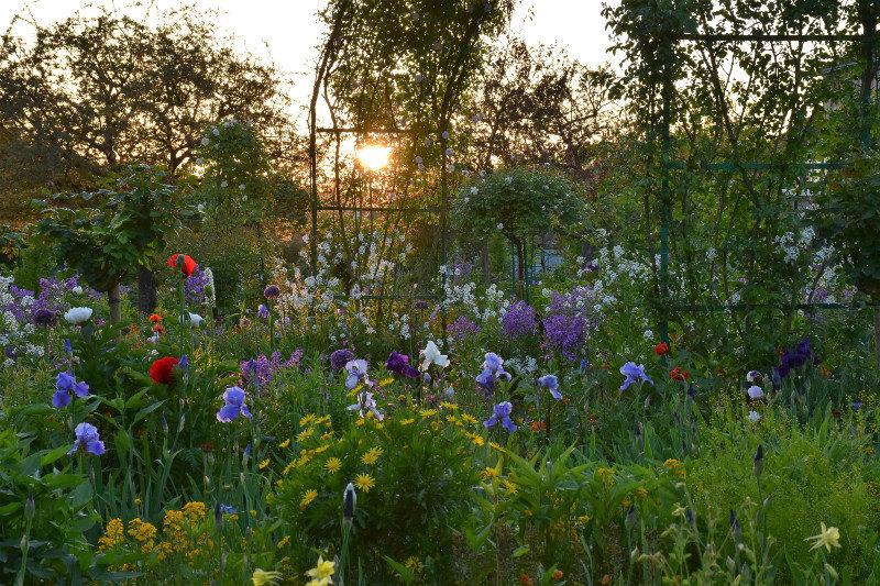 Coucher de soleil sur le jardin de fleurs de Monet à Giverny