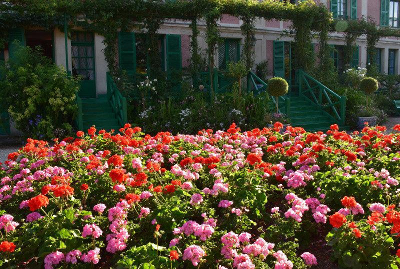 Géraniums roses et rouges devant la maison de Monet à Giverny