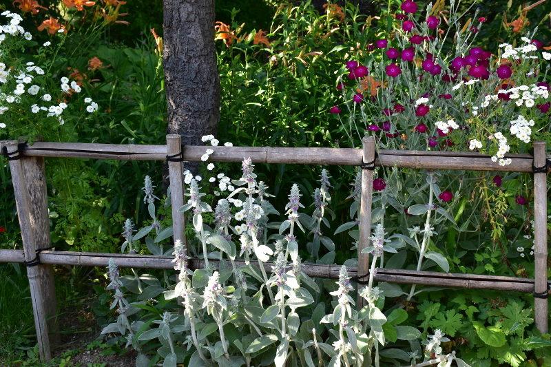 Vivaces d'été à Giverny