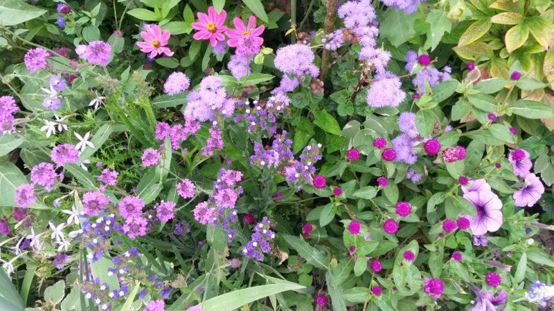 Fleurettes violettes