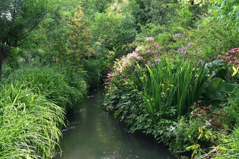 Le Ru à Giverny, jardins de Monet